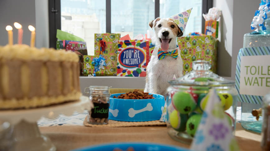 dog-birthday-party-5421-h