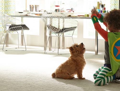 Stain Resistant Carpet for Pets