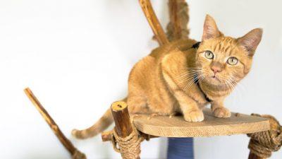 diy-cat-tree
