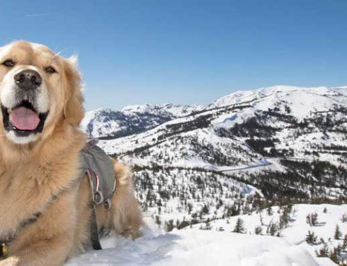 Hope in the Snow: The Life of a Search-and-Rescue Dog