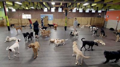 flooring-for-dogs-petprotect