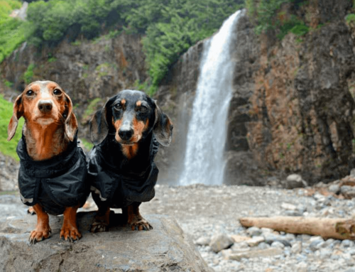 Hiking with Dogs: Tails From the Trails