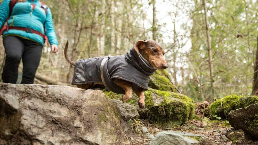 hiking-with-dogs-dachshund-jumping